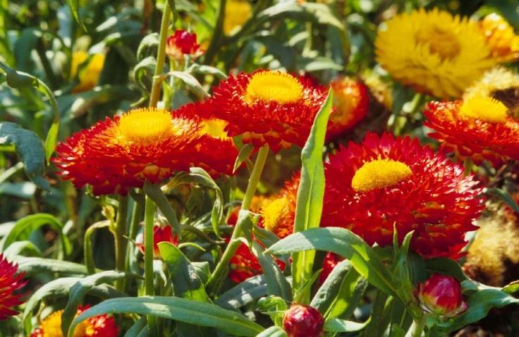 floare d pai 4